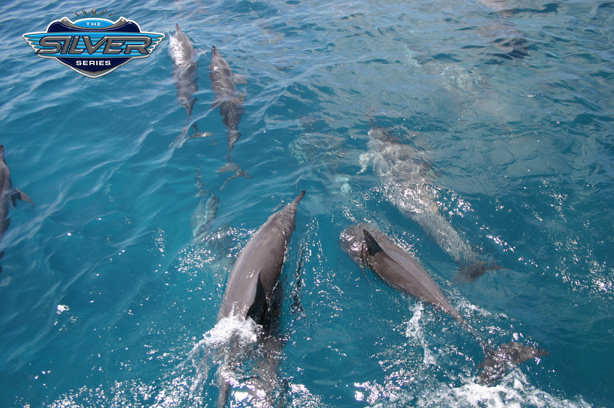 Dolphins racing Silversonic